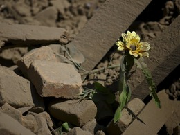 尼泊尔灾后重建上日程 亚投行或成救命稻草